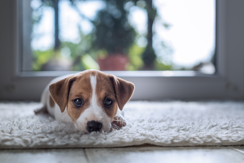 How to Prevent Foul Smell from a Dirty Carpet?